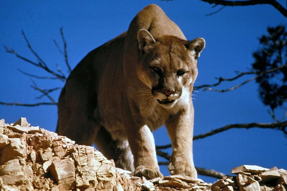 Monatliche Einkommen- Puma