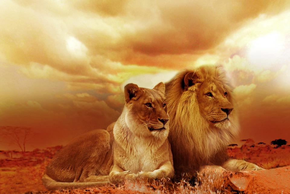 Monatliche Einkommen -Löwe