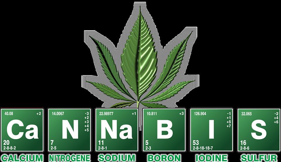 Kiffen bis der Arzt kommt, Cannabis
